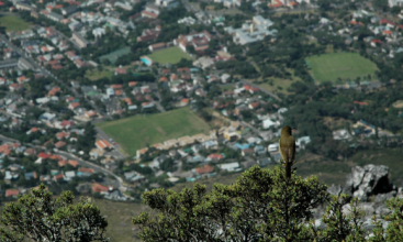 Verda Aner // Bird view, Cape Town